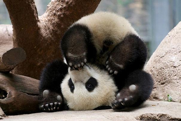 Funny Animals Doing Yoga