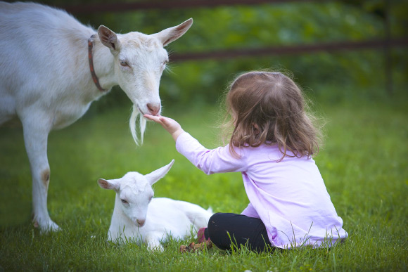 Nos amis les animaux. - Page 37 Image_6371-Goats