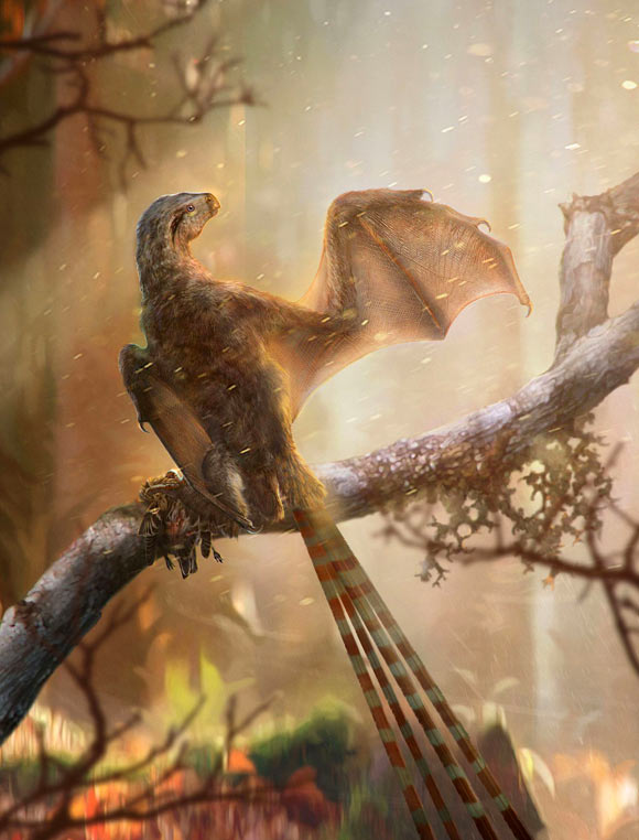 Ambopteryx longibrachium. Image credit: Chung-Tat Cheung & Min Wang / Institute of Vertebrate Paleontology and Paleoanthropology, Chinese Academy of Sciences.