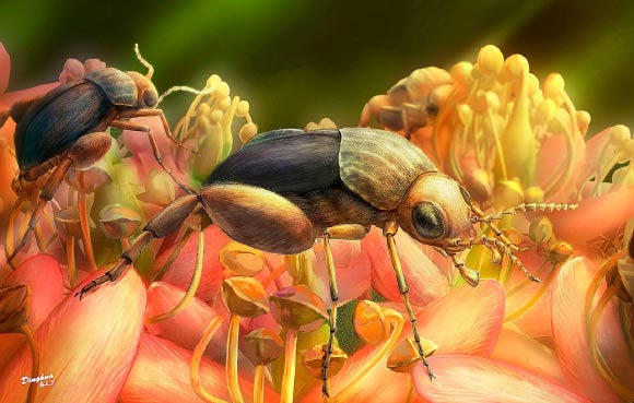 Ecological reconstruction of tumbling flower beetles Angimordella burmitina. These beetles are feeding on eudicot flowers. The color and morphology of flowers are artistic only. Image credit: Ding-hau Yang / Bao et al, doi: 10.1073/pnas.1916186116