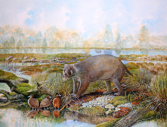 An artist's impression of Mukupirna nambensis living in central Australia that was much greener 25 million years ago. Image credit: Peter Schouten.