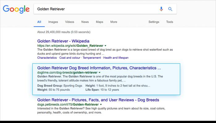 google results Golden Retriever