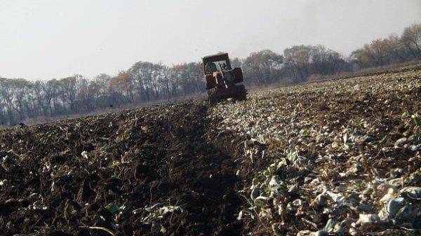 На заработки в Польшу - фермеры вынуждены ехать из Украины ...