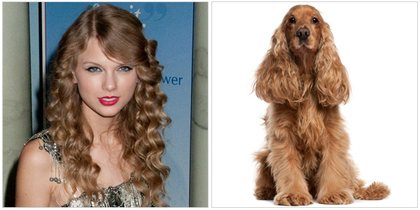 Taylor Swift and a cocker spaniel