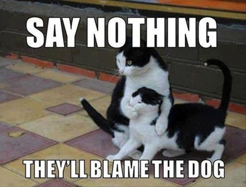 LOL Cats: It's important to know how to keep a secret