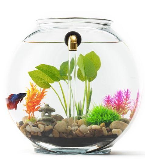 No Clean Aquariums