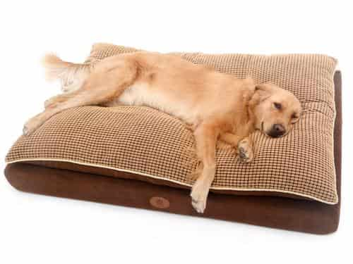 paradise orthopedic pillow top dog bed