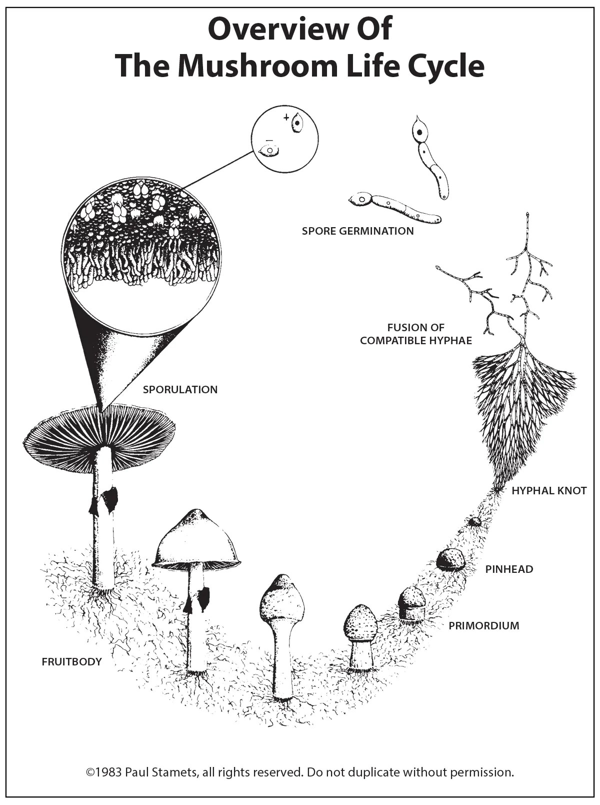 A Pictorial Overview of the Mushroom Life Cycle — Fungi Perfecti