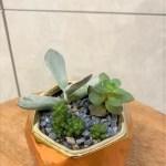 Mini Succulent Arrangement Ps Floral Atelier