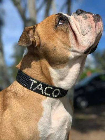 Boys Personalised Swarovski Leather Dog Collar