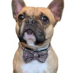 Dog bow Swarovski bling australia