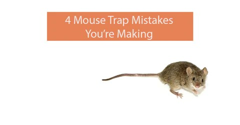 4 Mouse Trap Mistakes You Re Making Automatic Trap Company