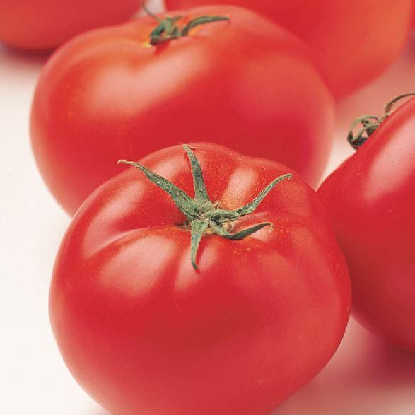 tomato seeds patio choice sow easy