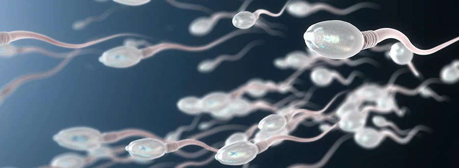 Male Fertility and Sperm