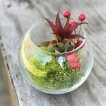 Festive Terrarium With Green Reindeer Moss Berry Sprig Red Abdita Air Plant Supply Co