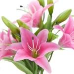 Real Touch Deep Pink Lilies Artificial Flower Bouquet 5 Stems Fiveseasonstuff
