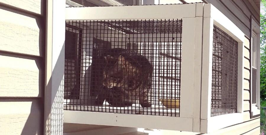 cat cage outdoor window