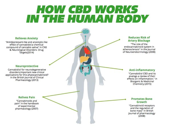 how cbd works in your body