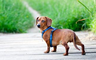 Can CBD Help my dog with arthritis