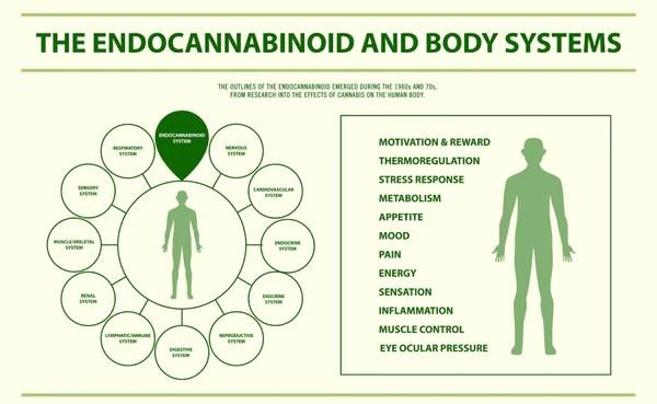 CBD endocannabinoid System
