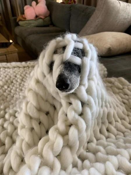 dog psoriasis