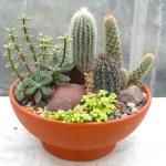 Cactus Garden Indoor Plants In Lexington Ky Michler S Florist