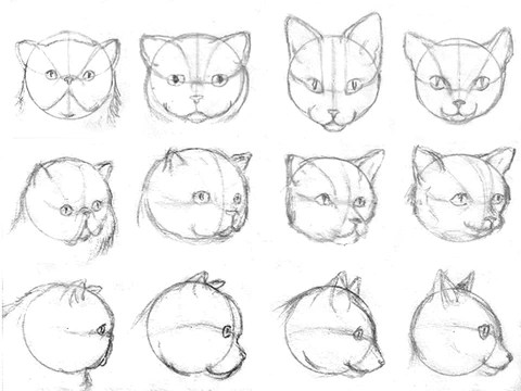 How To Draw Cats With Pencil For The Absolute Beginner Learn To Draw Books