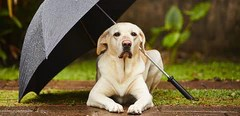 Fears and Phobias in Dogs
