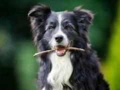 senior dog signs