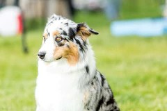 best food for senior dogs with sensitive stomach