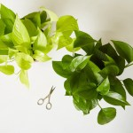 Plant Propagation For Beginners Plant Care Tips The Sill