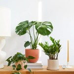 From A To Zz Plant Plant Care And Tips The Sill