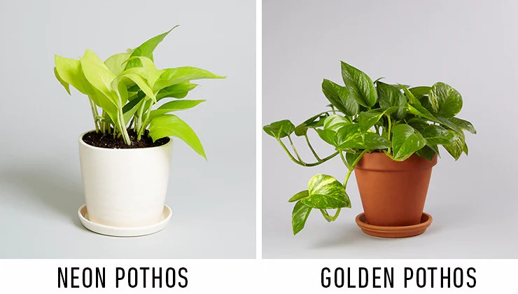 Indoor Plant Varieties
