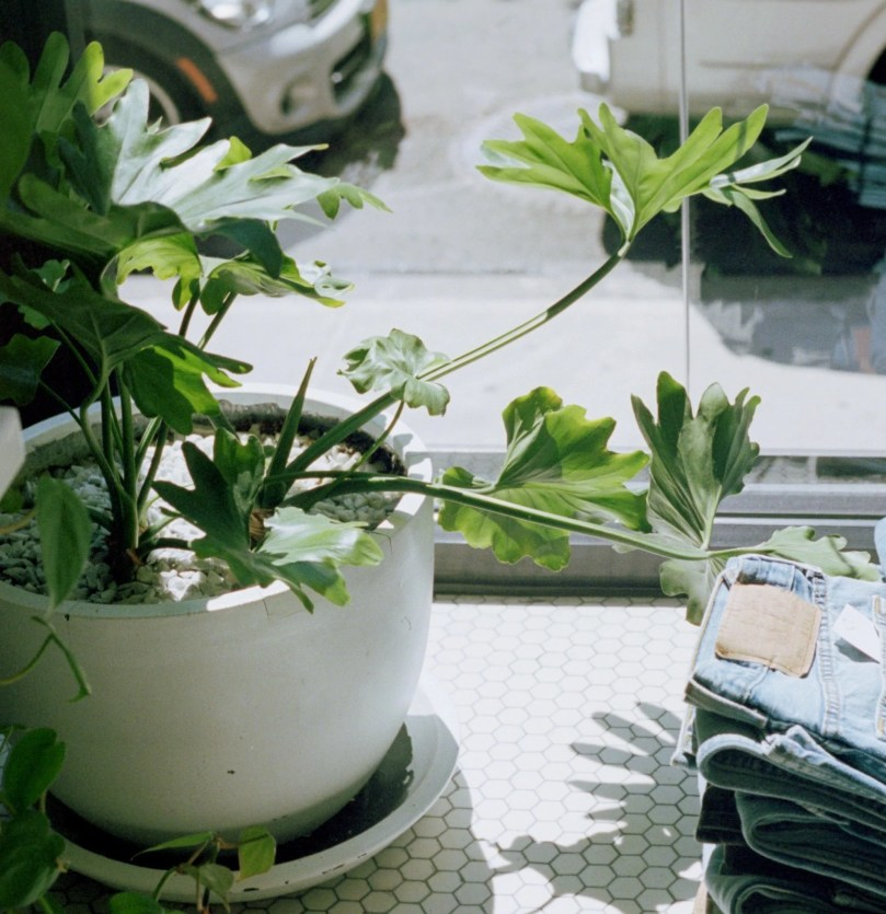 How to Prevent and Fix Leggy Plants