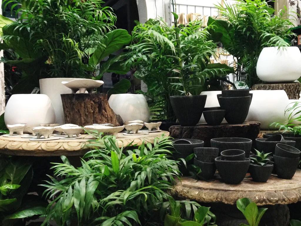 Indoor Hanging Flowering Plants