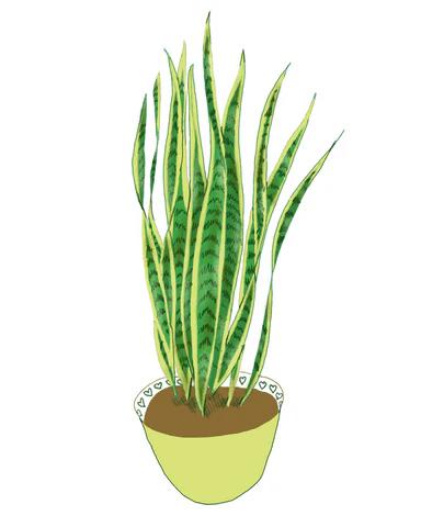 Snake Plant | Illustration by Wren McMurdo