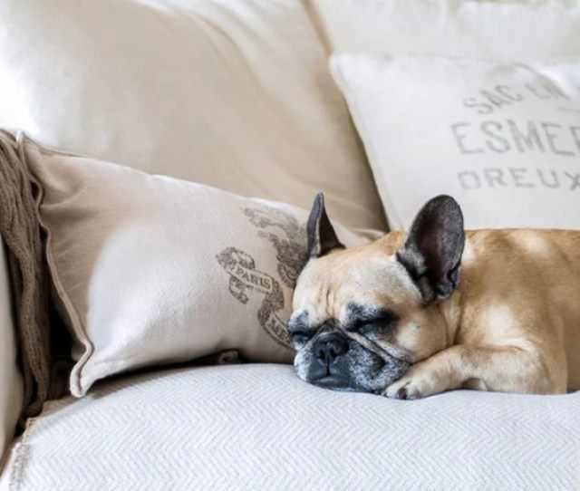 We Love Our Pets But We Dont Always Love What They Do To Our Sofas As The Mom To Three Beautiful Labs Lori Slater Co Founder Ingreen Realized That
