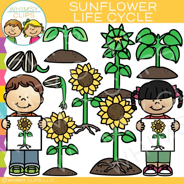 Sunflower Life Cycle Clip Art Images Illustrations Whimsy Clips
