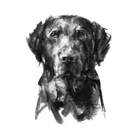 PaintMyDog Dog Art Contemporary Dog Portraits Dog