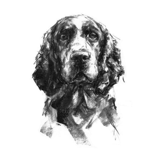 Springer Spaniel Sketch Print