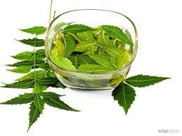 Make Your Own Neem Natural Insecticide