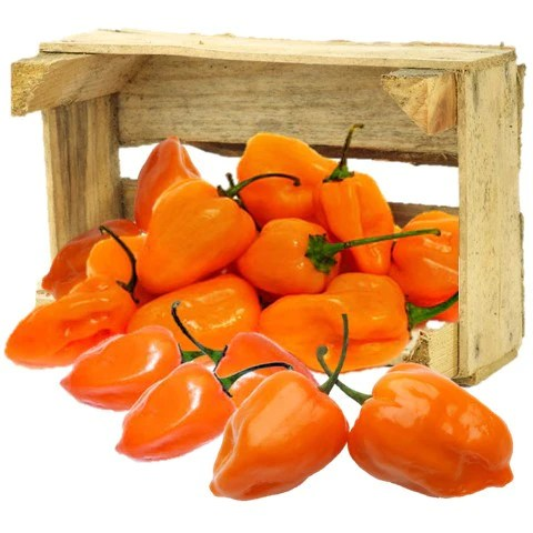 Image result for HABANERO