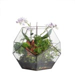 Handmade Extra Large Large Pentagon Glass Geometric Terrarium For Succulents Fern Moss Airplants Ncypgarden