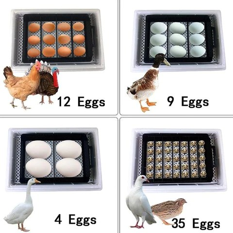 Egg Incubator Hatching Chicken Duck Quail Hatch Eggs Incubating