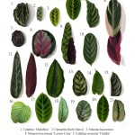 How To Care For Your Prayer Plants The Essentials Planterina
