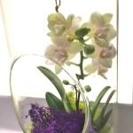 Orchid Terrarium 12 Inch Glass Most Popular