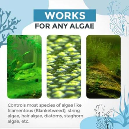 Algae Repellent Agent