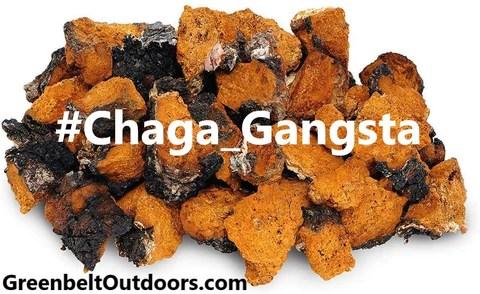 #chaga_gangsta chaga gangsta #chagagansta coronavirus corona virus covid-19 vitamin c