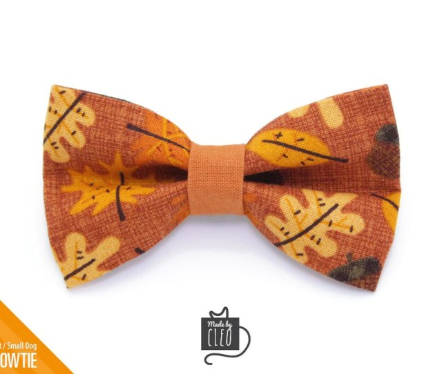 Autumn Cat Bow Tie Fall Ing For You Fall Leaves