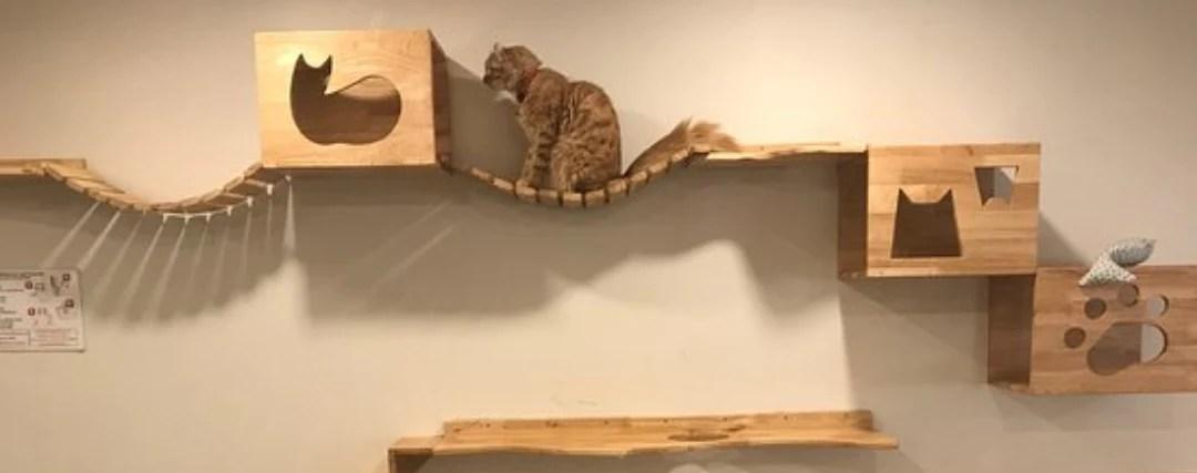 comment fabriquer un arbre a chat mural